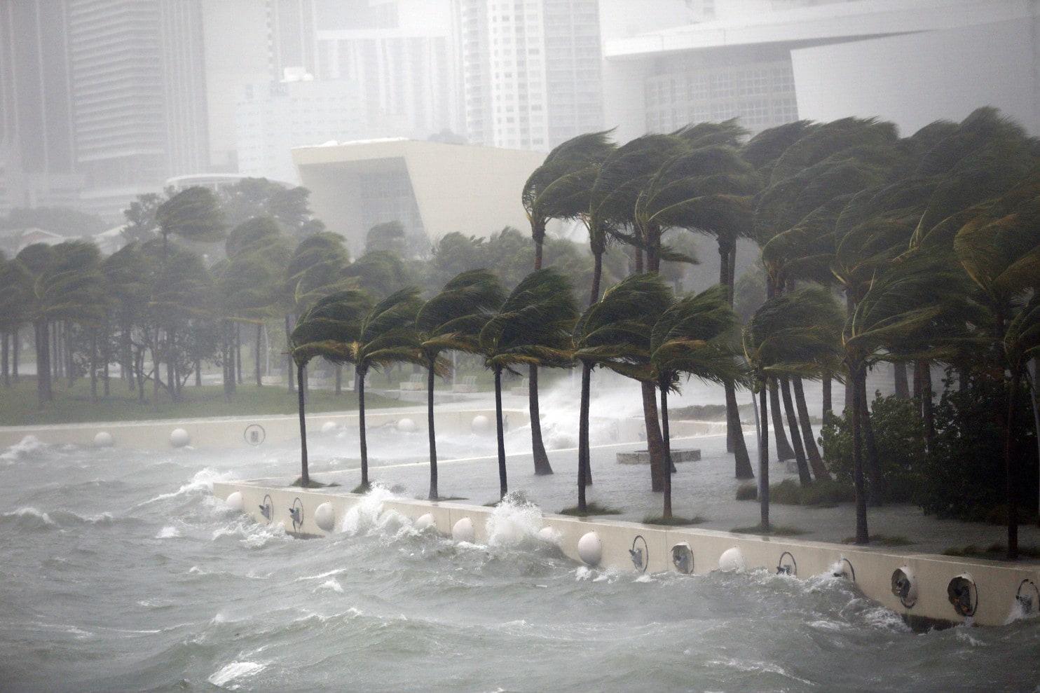 Hurricane Irma Delays Of Shark And Man International Release